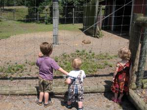 Oliver, Callum and Eleni checking out the capybaras at the zoo
